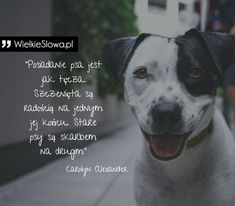 Psy - cytaty, sentencje, aforyzmy o psach Save Life, Life Motivation, Motto, Life Hacks, Dogs, Cute, Animals, Animal Pictures, Animales