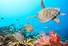 Dive with Ghummo Andaman and experience the splendid underwater marine life.....