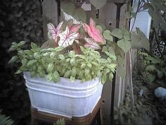This guide is about container gardening. When faced with limited garden space or to enhance your patio, many flower and food producing plants can be grown in containers.