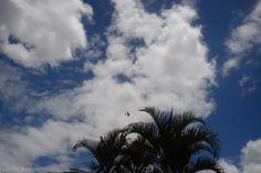 Asas no céu por Inês de Barros Jardim São Paulo - Sorocaba/SP outubro/2013