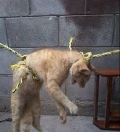 Congress of the State of Sinaloa, Dip. Red Adolfo Montoya  We demand that Sinaloa punishes animal abuse.