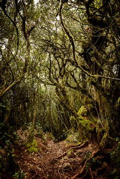 Mossy Forrest by John Crux on Beautiful World, Beautiful Places, Amazing Places, Strait Of Malacca, Cameron Highlands, Rest Of The World, Belleza Natural, Borneo, Kuala Lumpur