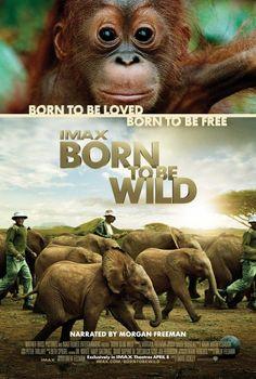 Born to Be Wild (2011) - #AMDb *ikam orang pangkalan bun? harus nonton!@pangkalanbun31059 #be_kobar #pangkalanbun31059