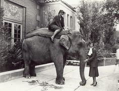 Two women with the elephant Miss Jim at the St. Louis Zoo. Photograph taken by W. C. Persons in 1925. Forest Park Collection, Missouri History Museum.