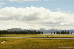 Pelican Creek || Yellowstone National Park || Dirt In My Shoes