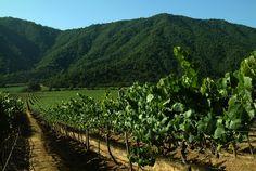 Wieder ein tolles Bild von Emiliana Organic Vineyards (Chile)!