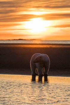 Barrier Islands, Beaufort Sea, Arctic, Alaska. {AlaskaPhotoGraphics.com}