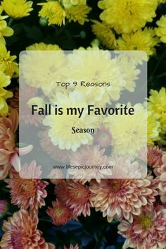 Why Fall Is My Favorite Season – Top 9 Reasons | Life's Epic Journey