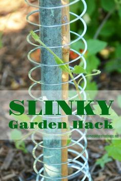 I'm sharing my favorite flowering summer vine and a creative way to help it climb that I discovered, with a Slinky! Black-eyed Susan vine (Thunbergia alata) is a favorite easy-to-grow floweri… Summer Vine, Summer Garden, Limelight Hydrangea, Climbing Vines, Climbing Flowering Vines, Black Eyed Susan, Garden Trellis, Vine Trellis, Garden Beds