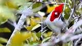 Aves Raras - Resultados Yahoo Search da busca de imagens
