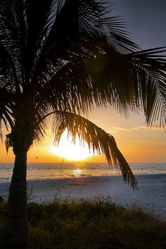 ✯ Palm tree and sunset