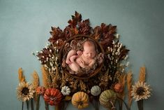 Fall digital backdrops are starting to go live in the store! I absolutely love this design, Celebrate Autumn, from the Autumn Days Collection! Many more designs coming soon! Digital backdrop design and newborn image by Junkyard Studio Photography Fall Newborn Photography, Halloween Photography, Photography Basics, Autumn Photography, Photography Backdrops, Digital Photography, Photography Editing, Travel Photography, Fall Newborn Pictures