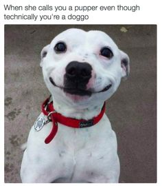 30 Dog memes for a positive Day. Puppers included - World's largest collection of cat memes and other animals Animals And Pets, Funny Animals, Cute Animals, Happy Puppy, Happy Dogs, Pet Puppy, Dog Cat, Funny Dogs, Cute Dogs