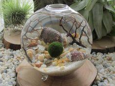 décoration marine avec aquarium coquillage et gravier décoratif