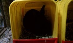 Rabbit nest box, kitty litter container upcycle, chicken nest. I saw this as a chicken nest, but my bunnies love it.