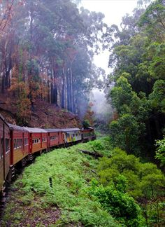 Viaje a Sri Lanka: 10 lugares clave Sri Lanka, The Enchantments, Stunning Photography, By Train, Train Travel, Travel Goals, Enchanted, Island, Explore