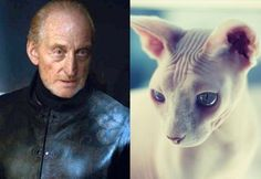 18 Pictures of Cats That Look Like Game of Thrones Characters - We Love Cats and Kittens
