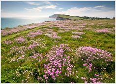 Freshwater Bay, Isle of Wight, England, UK Famous Gardens, Amazing Gardens, Meadow Flowers, Wild Flowers, Emigrate To Australia, Countryside Landscape, New Forest, Isle Of Wight, Best Location