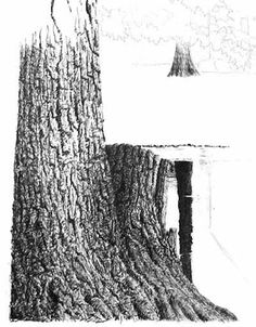 How to draw bark in pen and ink by Vincent