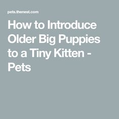 How to Introduce Older Big Puppies to a Tiny Kitten - Pets