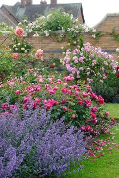 The right varieties to compliment and accent the home's style and your vision, will contribute to the success of your landscape and ultimate rose garden design. Beautiful Gardens, Beautiful Flowers, David Austin Roses, Garden Cottage, My Secret Garden, Dream Garden, Garden Inspiration, Garden Landscaping, Landscaping Design