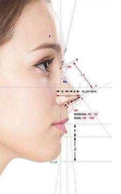 Risultati immagini per golden ratio face