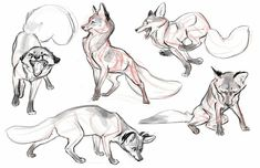 Claire gary how to draw foxes, fox drawing, drawing tips, drawing reference, Animal Sketches, Animal Drawings, Art Drawings, Arte Furry, Furry Art, Fox Drawing, Drawing Sketches, Drawing Tips, Posca Art