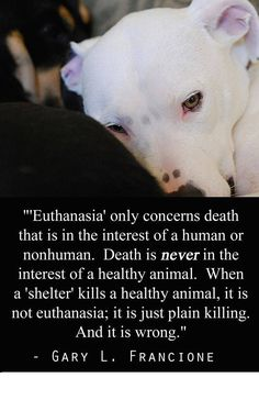 """""""Euthanasia only concerns death that is in the interest of a human or nonhuman. Death is NEVER in the interest of a healthy animal. When a shelter kills a healthy animal, it is not euthanasia; it is just plain killing. And, it is wrong."""" --Gary L. Francione"""
