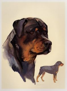 Vintage ROTTWEILER Dog Print Gallery Wall Art  Beautiful Rottweiler Illustration