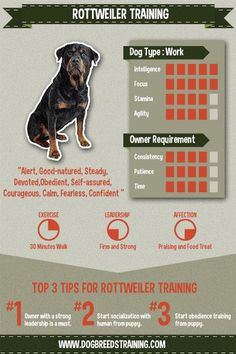 How To Train a Rottweiler infographic. Check out the full article on my website!