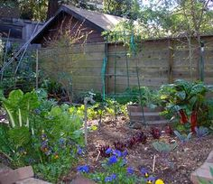 Home Food Forest ~ website