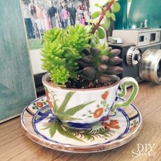 Tea Cup Succulent Planters - DIY Show Off ™ @DIY Show Off / where every succulent deserves to live. So cute!