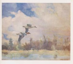 C 1936 Book print, unmounted, A Pair of Teal over Fritton Lake, a Peter Scott print