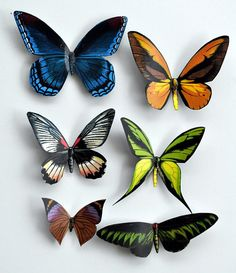 Butterfly Magnets Insects Wholesale Lot of by DougWalpusArtStudio, $10.00