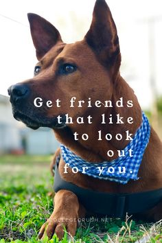 Get friends that like to look out for you. | friendship quote | college life quote | friend quote | dog quote | puppy quote | animal quote | freshman tips | positive quote | dear younger me | best friend quote | affirmation | relationship quote | success quote | via collegecrush.net Puppy Quotes, Animal Quotes, My Best Friend Quotes, Best Friends, College Life Quotes, Freshman Tips, Affirmation, Friendship Quotes, Success Quotes