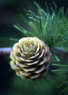 Soft green cone pineconejunkie.etsy.com likes