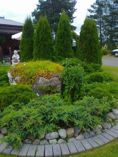 Havuistutus Home And Garden, Outdoor Decor, Plants, Garden, Outdoor, Evergreen, Conifers, Landscape, Sidewalk