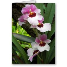 sold 1 Pink Orchids floral greeting/note card (inside blank)
