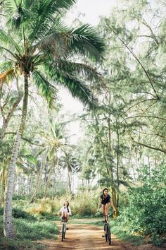 Hawaii Travel Bucketlist - Laie, Oahu - Ride bikes along the bike path in Laie all the way to a beautiful beach and coconut forest. More Hawaii travel ideas on our site!