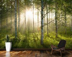Birch Forest Sunlight wallpaper mural room setting