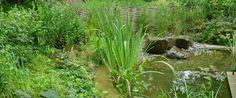 Pond - The Wildlife Trusts