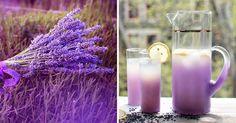 Zázračné vlastnosti levandule a recept na levandulový čaj, limonádu a olej   NejRecept.cz