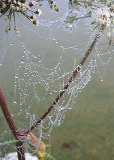 Pinner said: Every spring morning on our way to school- we would make a hoop of sticks and scoop these magical webs up for ourselves - we imagined they were made by the fairies. Spider web covered with dew drops Dew Drops, Rain Drops, Beautiful Artwork, Beautiful Pictures, Fotografia Macro, All Nature, Water Droplets, Natural World, Faeries
