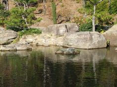 Garden of the Pine Wind pool Arkansas Mountains, Mount Rushmore, Pine, Explore, Places, Garden, Nature, Travel, Pine Tree