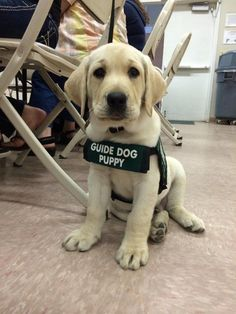 But they're always ready to work hard! | 27 Reasons Labradors Are The Best Creatures In The Galaxy