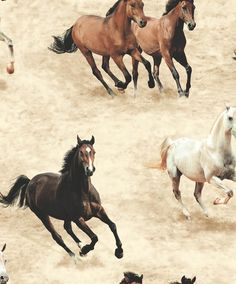 Shop - Wild Horses | Annandale Wallpapers