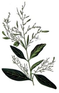 andrographis paniculata research paper Full length research paper genetic variability among andrographis paniculata in chhattisgarh region assessed by rapd markers preeti lata minz1, namita singh2.