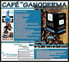 Ganoderma en café SHELO NABEL
