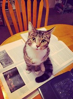 12 Things All Cat Owners Learn the Hard Way – Meowingtons