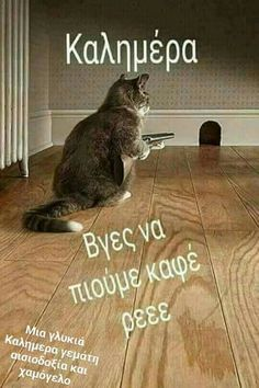 Funny Greek Quotes, Funny Quotes, Funny Memes, Jokes, Good Morning Messages, Good Morning Quotes, Funny Animal Memes, Cute Funny Animals, Sweet Words